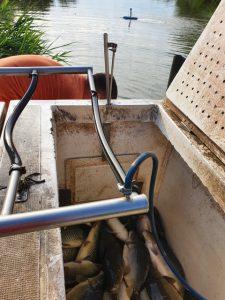 Nyári pontytelepítés a Völgyhídi Horgásztavon.