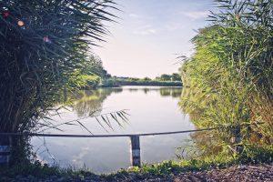 A tó területén állami horgászengedély kötelezettség van!